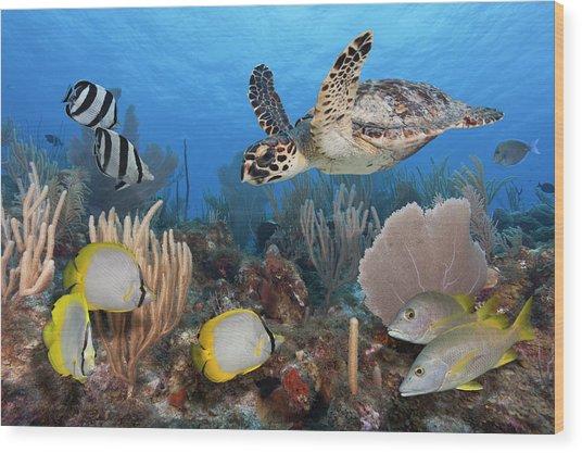 Sea Turtle, Fish, On Colorful Tropical Wood Print
