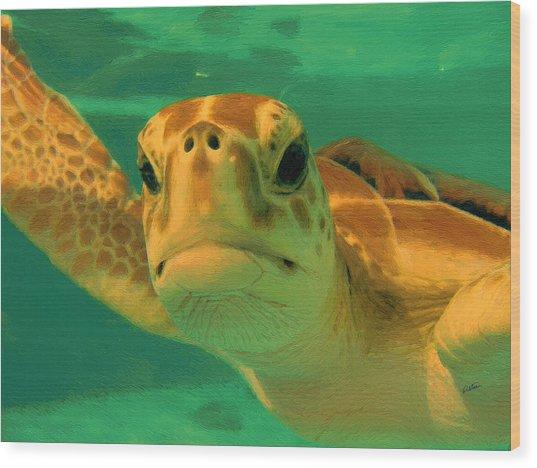 Sea Turtle Off The Mexican Coast - Dwp2086549 Wood Print