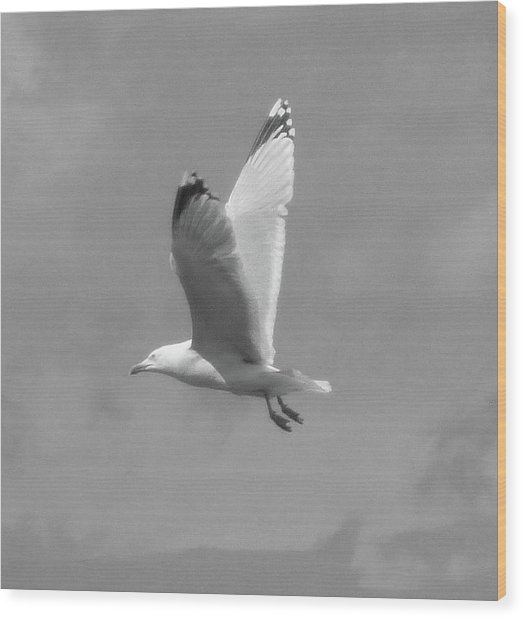 Seagull Over Llandudno Wood Print