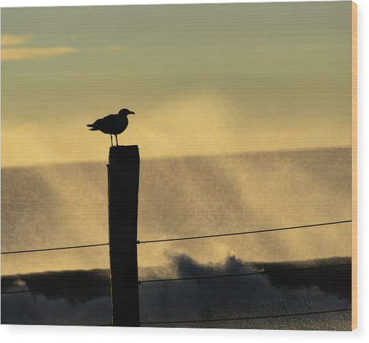 Seagull Silhouette On A Piling Wood Print