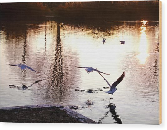 Seagulls In The Morning Wood Print