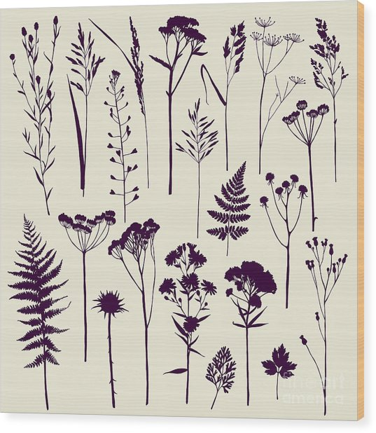 Set Of Illustrations Of Plants Wood Print