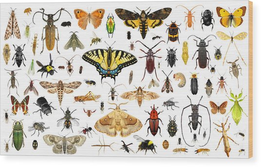Set Of Insects On A White Background Wood Print