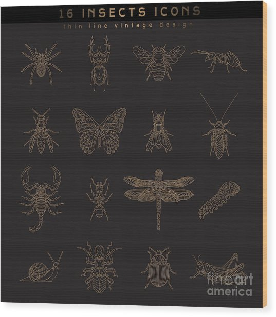 Set Of Vintage Thin Line Insects Icons Wood Print