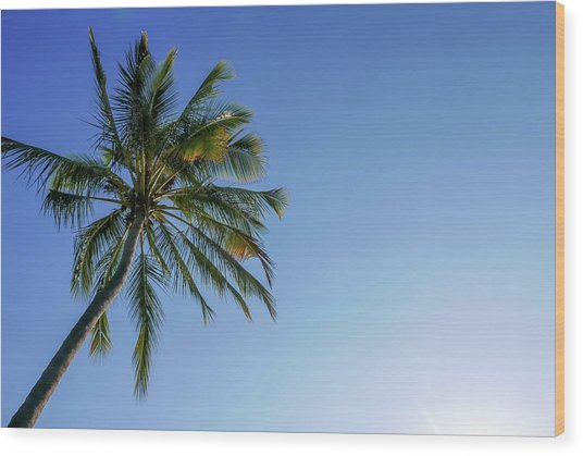 Shades Of Blue And A Palm Tree Wood Print