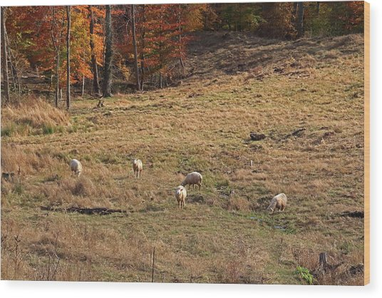 Wood Print featuring the photograph Sheep In A Field by Angela Murdock
