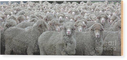 Sheep Looking Wood Print by Lee Torrens