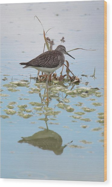 Shorebird Reflection Wood Print