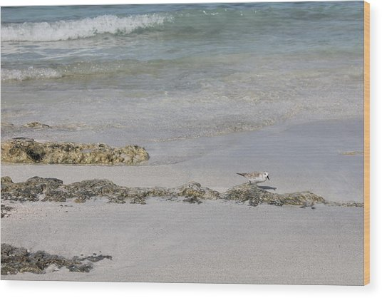 Wood Print featuring the photograph Shorebird by Ruth Kamenev