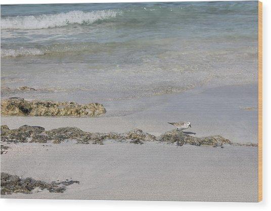 Shorebird Wood Print