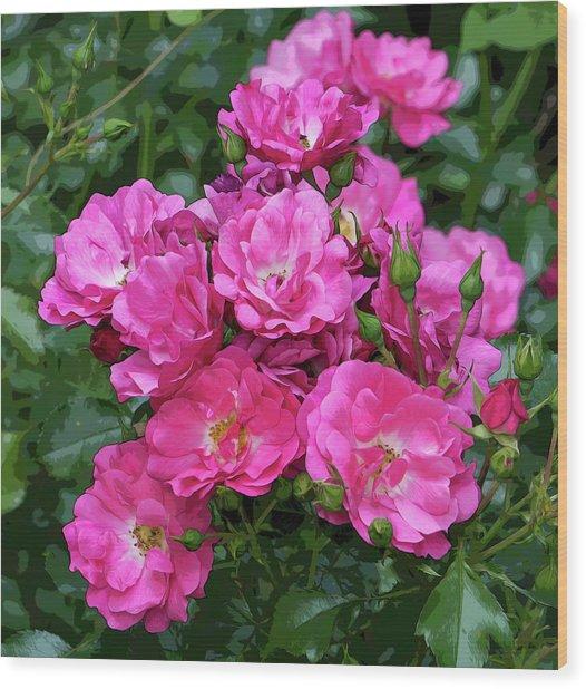 Shrub Rose Stylized Wood Print