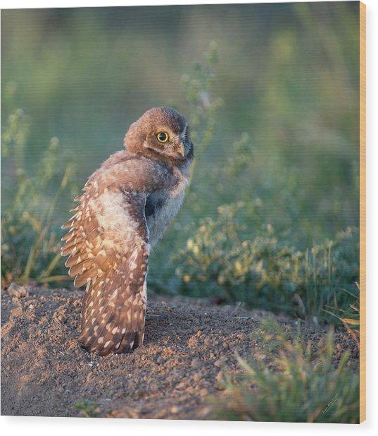 Shy Young Burrowing Owl Wood Print