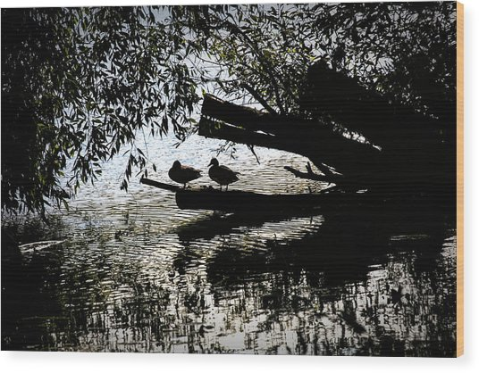 Silhouette Ducks #h9 Wood Print