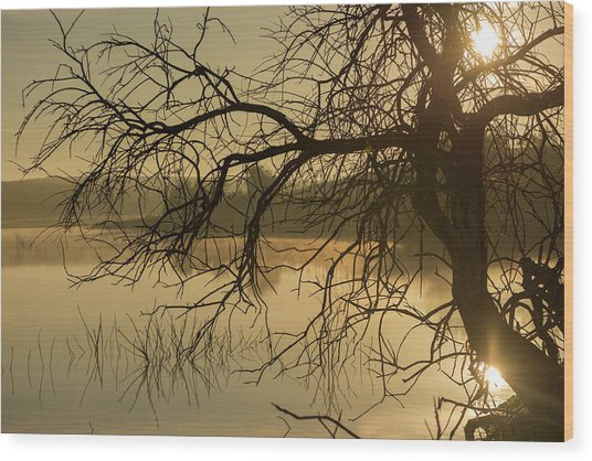 Silhouette Of A Tree By The River At Sunrise Wood Print