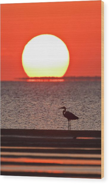 Silhouette Of Great Blue Heron Ardea Wood Print by Danita Delimont