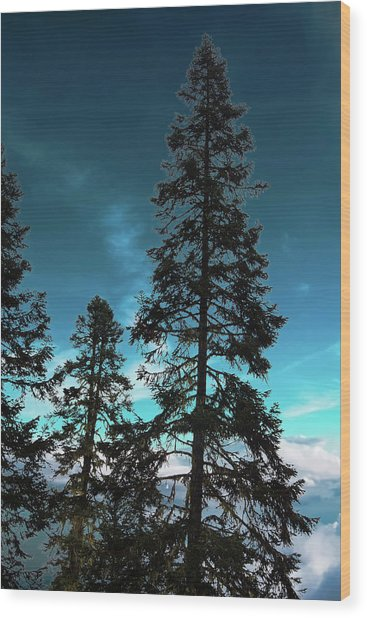 Silhouette Of Tall Conifers In Autumn Wood Print