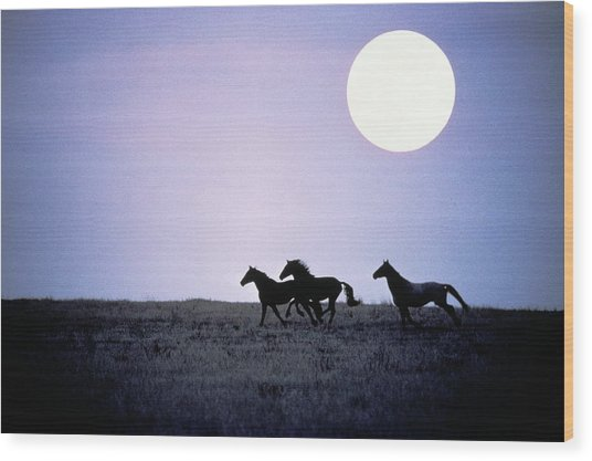 Silhouette Of Wild Horses Running In Wood Print by Jake Rajs