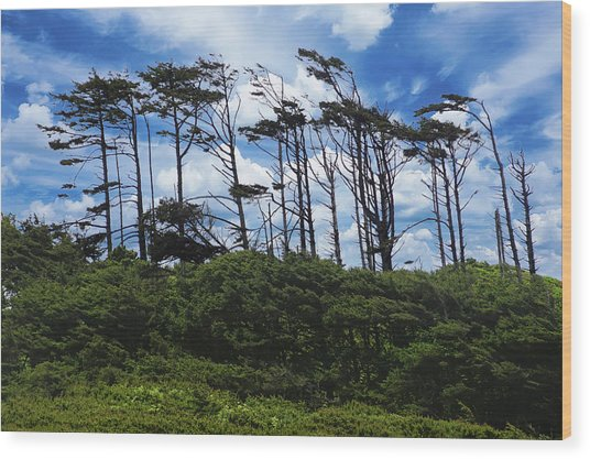 Silhouettes Of Wind Sculpted Krumholz Trees  Wood Print