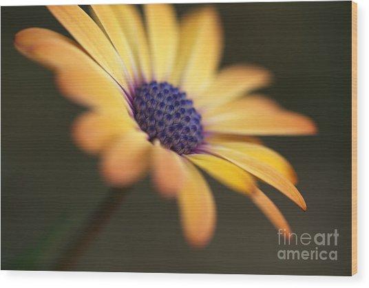 Simply Beautiful In Yellow To Orange  Wood Print