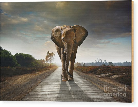 Single Elephant Walking In A Road With Wood Print