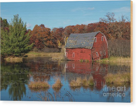Sinking Red Barn In Fall Wood Print
