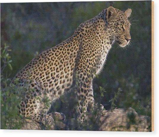 Sitting Leopard Wood Print