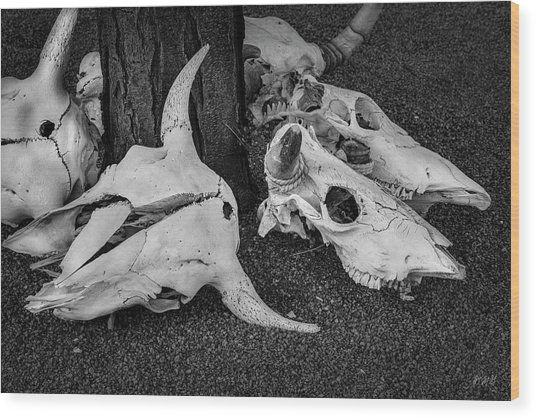 Wood Print featuring the photograph Skulls V Bw by David Gordon