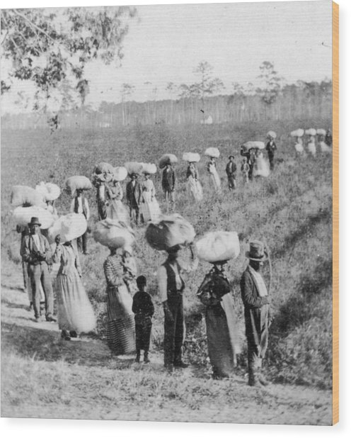Slaves In The Cotton Fields Wood Print by Fotosearch