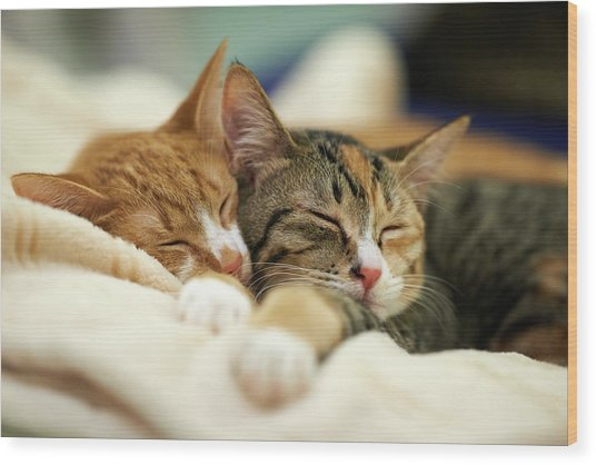 Sleeping Kittens Wood Print by Akimasa Harada