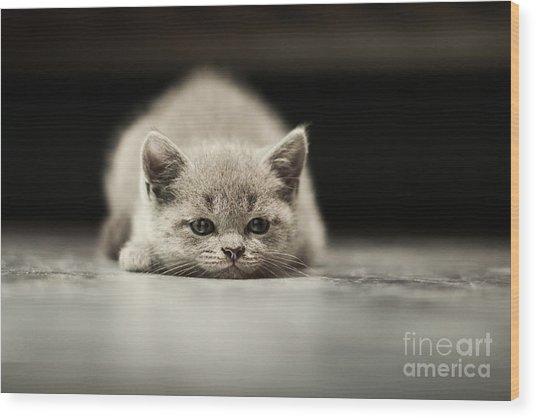 Sleepy British Kitten Over Black Wood Print
