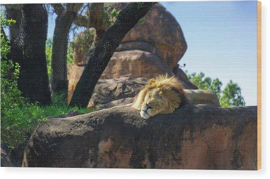 Sleepy Lion Wood Print