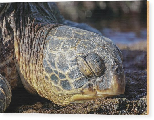 Sleepy Maui Sea Turtle Wood Print