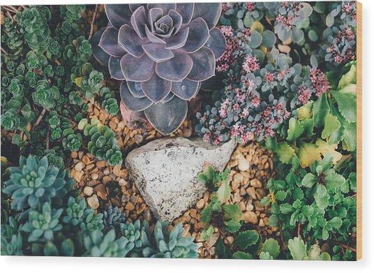Small Succulent Garden Wood Print