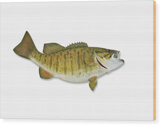 Smallmouth Bass With Clipping Path Wood Print by Georgepeters