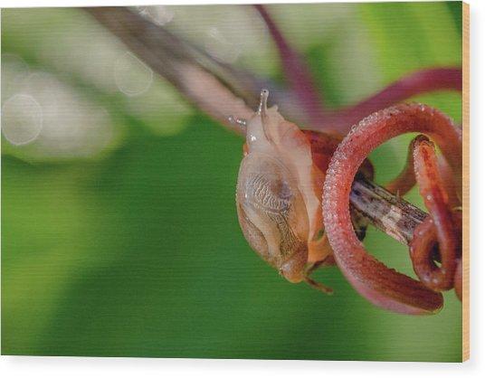 Snails Pace Wood Print