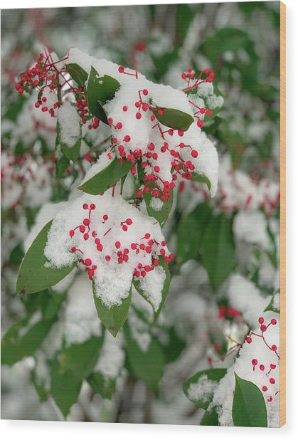 Snow Covered Winter Berries Wood Print