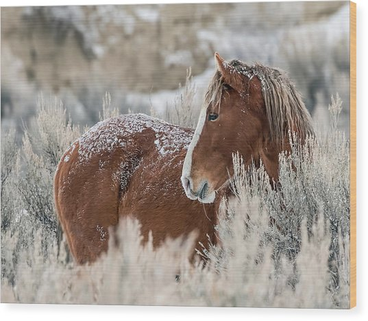 Snow Dusted Mustang Stallion Wood Print