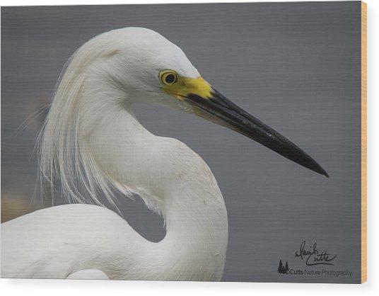 Snow Egret Portrait Wood Print