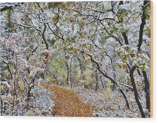 Snow Greets Autumn Wood Print