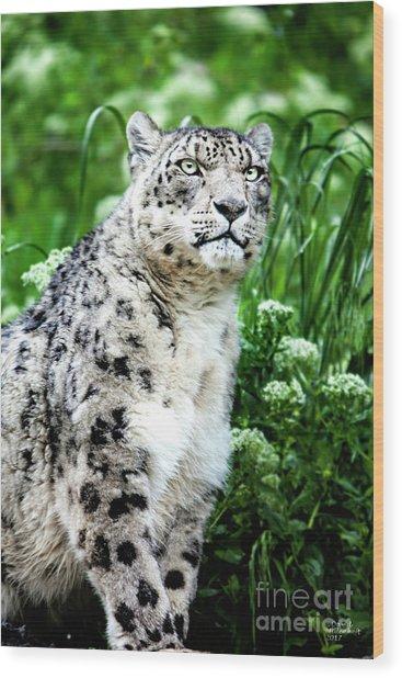Snow Leopard, Leopard Art, Animal Decor, Nursery Decor, Game Room Decor,  Wood Print