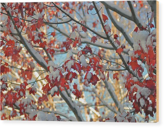 Snow On Maple Leaves Wood Print