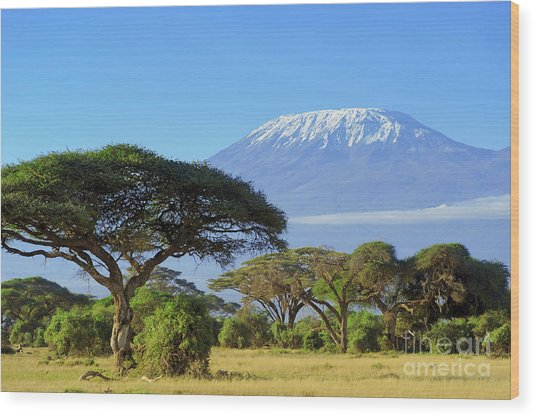 Snow On Top Of Mount Kilimanjaro In Wood Print