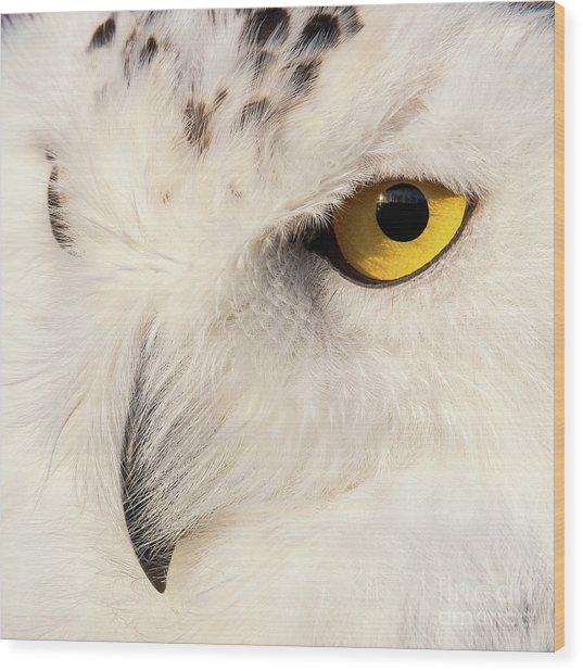 Snow Owl Eye Wood Print
