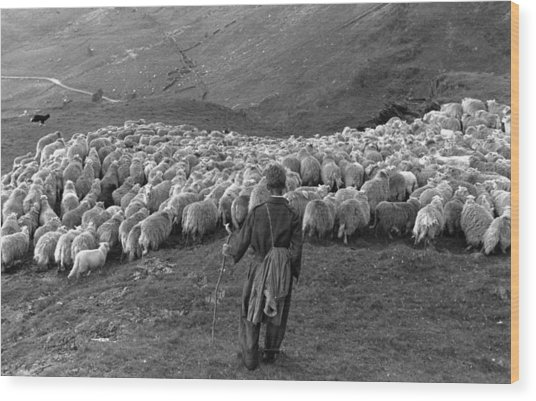Snowdonia Sheep Wood Print by Grace Robertson