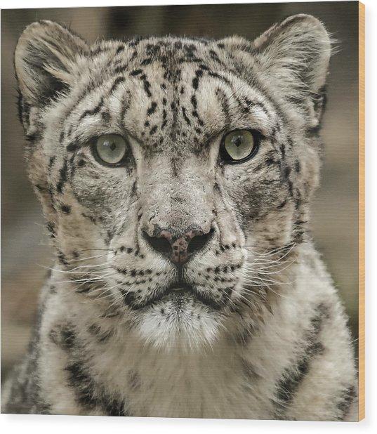 Snowleopardfacial Wood Print