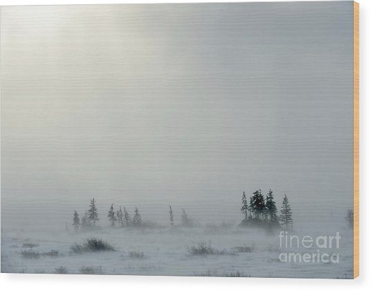 Snowstorm In Tundra Landscape With Wood Print