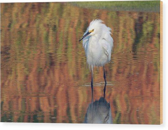 Snowy Egret 6249-061219 Wood Print