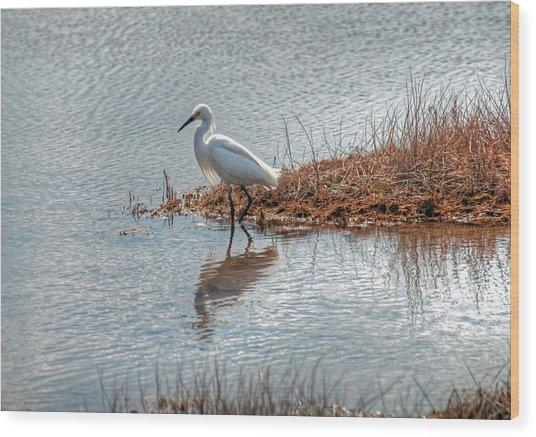 Snowy Egret Hunting A Salt Marsh Wood Print