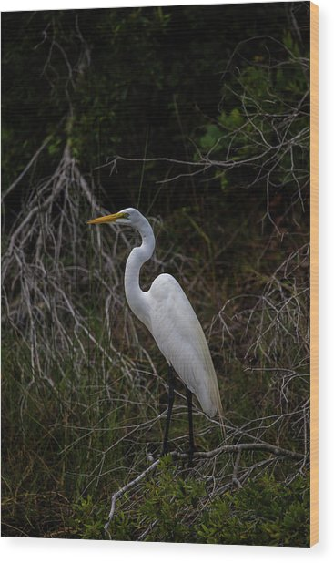 Snowy Egret On A Hot Summer Day Wood Print