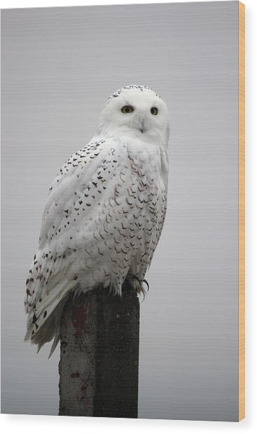 Snowy Owl In Fog Wood Print